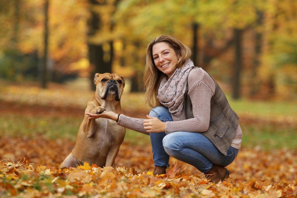 santé bulldog continental